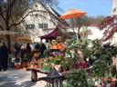 Gartenausstellung -jetzt bei Sonnenschein