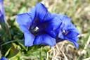 Diese wunderschönen blauen Blüten